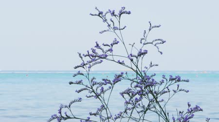 Flowering lilac limonium plant against sea, unrecognizable swimming people, blue sky, handheld shot. Sea-lavender purple flowers on Adriatic resort beach. Closeup of blooming violet sea lavender, swim