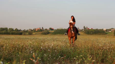 horse riding : Summer scenery with young woman riding horse along field Stock Footage