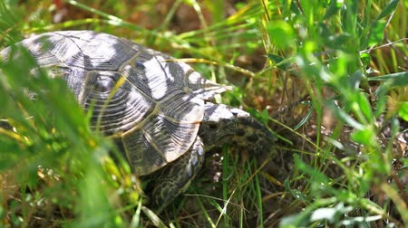 Small turtle sits in a green grass