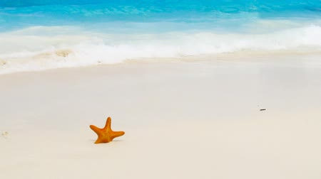 paraíso : nice starfish on the summer sandy beach