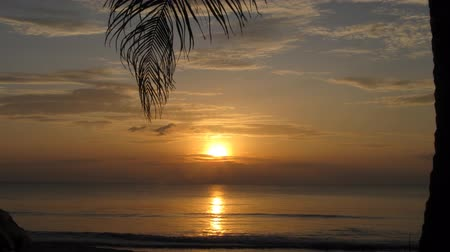 strand : Tropical sunset with palm branch on foreground