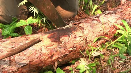 velo : Cutting timber with a hand saw