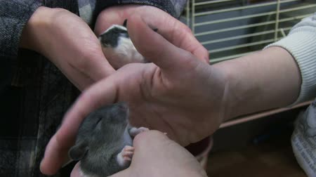 fare : Little mouse in children hands