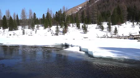 алтай : Frozen stream with ice. Spring river and snow. Cold water flows in the river ice.
