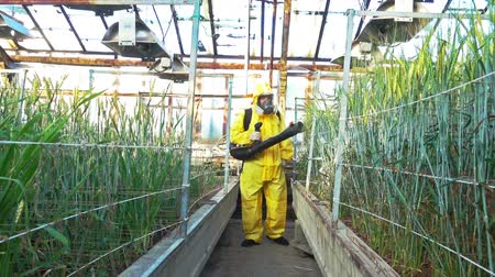 safeness : A man in a yellow protective suit sprays pesticide barley plants in scientific greenhouse