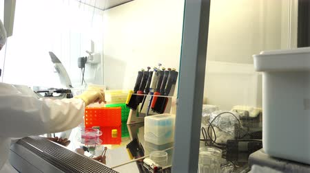 pipette : Young scientist working in a safety laminar air flow cabinet at laboratory Stock Footage