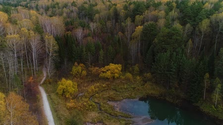cserjés : Autumn aerial survey drone walk in big city park. Autumn forest and small pond