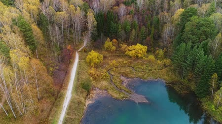 presente : Autumn aerial survey drone walk in big city park. Autumn forest and small pond