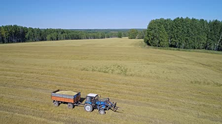 cleaning products : tractor loaded with grain oats rides on a mowed field