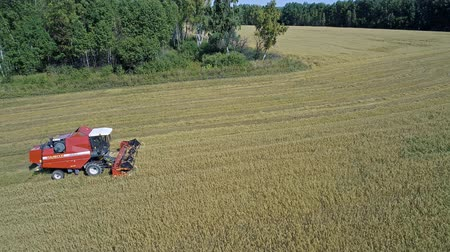 трактор : NOVOSIBIRSK, RUSSIA - SEPTEMBER 06, 2018: Combine harvester working on the large oat field in the countryside, aerial drone view.