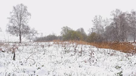 ekstra : Heavy snowfall over forest and field landscape in early spring Stok Video
