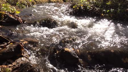 Mountain stream in autumn forest. Slow motion. Wideo