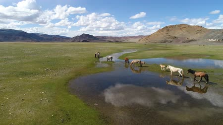 A herd of horses grazes in the alpine steppe against the backdrop of dry rocky mountains near the lake Tolbonuur. Khovd province, Western Mongolia. Stock Footage