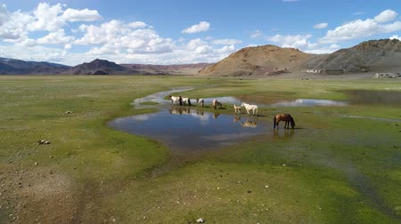 A herd of horses grazes in the alpine steppe against the backdrop of dry rocky mountains near the lake Tolbonuur. Khovd province, Western Mongolia. Stok Video