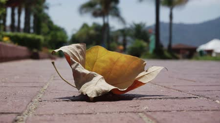 расплывчатый : The wind spins fell on the road yellowed tree leaf