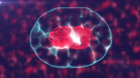 talos : Video that demonstrates cell division