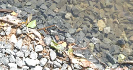 fallen leaves : calm wave over new broken stones at the waterfront of urban pond in the sunny summer day