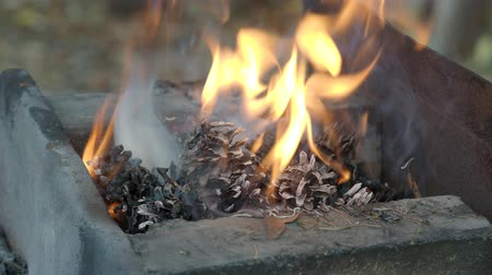 firebox : fire of a forge furnace with pine cones in an outdoor village smithy close up