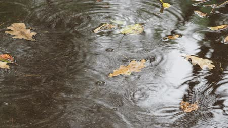 yağmur yağıyor : raindrops and floating yellow leaves of oak tree in puddle on asphalt road in autumn rain Stok Video