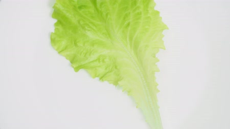 Lettuce on white plate, part 1 Стоковые видеозаписи