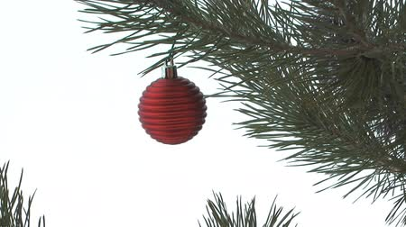 pinho : Pine branch close-up with New Years ball.
