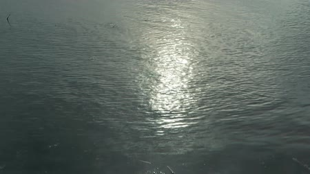 reflexão : Solar patches of light on water dimply.
