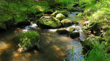strumień : River runs over boulders in the primeval forest Wideo