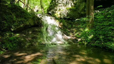 ribeiro : River runs over waterfalls in the primeval forest