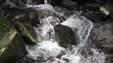 natura : River runs over boulders in the primeval forest Wideo
