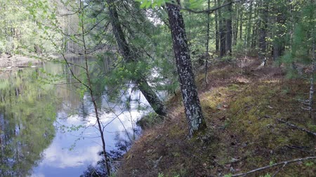 povodeň : Inside the dense taiga.Movement at the animal path along the river bank