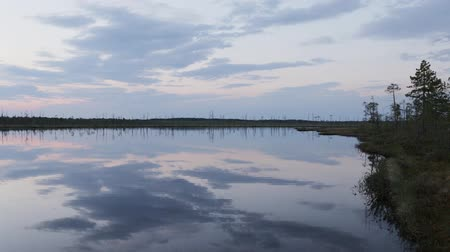 softwood forest : The Siberian tundra. Separate dry trees on the shore of a lake in the late evening, panoramic shot from the right to left Stock Footage