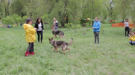itaat : Master class on training dogs Stok Video