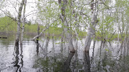 drewno : Shooting from the river during the spring flood