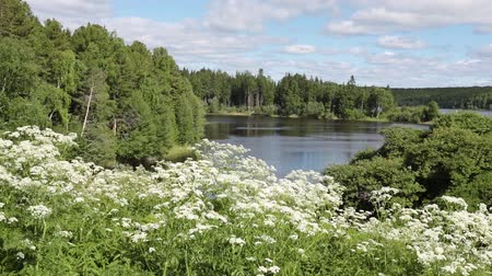 inculto : Summer landscape in Western Siberia on the Bank of the Ob river Stock Footage