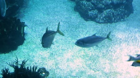 rekin : Footage of fishes swimming in big public aquarium Wideo