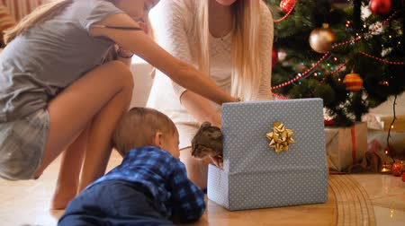 presentes : 4k footage of happy family taking cat out of Christmas gift box. Pet as gift for New Year Stock Footage