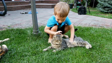 acariciando : 4k video of adorable toddler boy caressing gray cat lying on grass at backyard