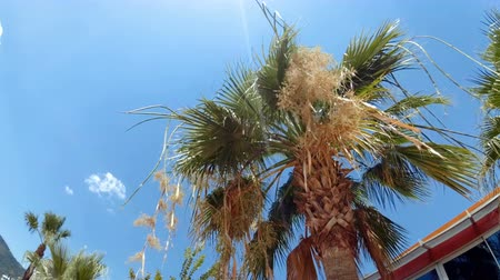 ветреный : 4k video of of palm tree top at bright sunny day