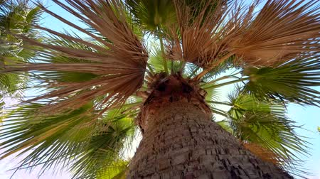 4k video of palm tree leaves against blue sky on sunny windy day