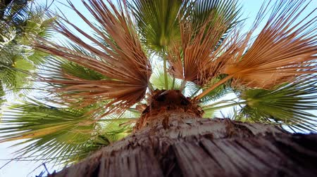 4k video from the ground on high palm tree against bright blue sky
