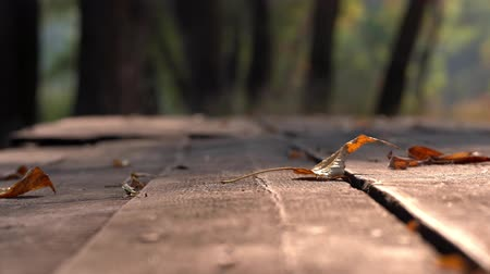 The wind blows dry yellow leaves from a wooden table. Autumn warm day Stock Footage