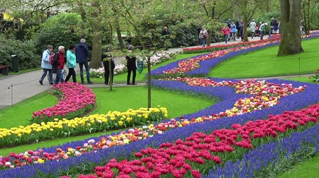 canteiro de flores : Keukenhof, Netherlands - April, 2018: Tourists walking in Keukenhof flowers park in Netherlands Vídeos