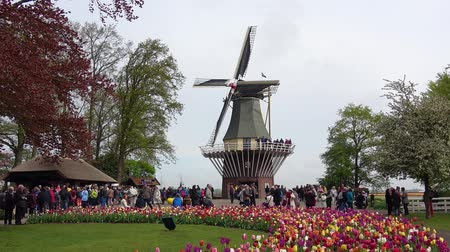 canteiro de flores : Keukenhof, Netherlands - April, 2018: Windmill in Keukenhof flowers park in Netherlands
