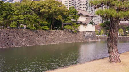 Pan video of pine trees along the moat of the Tokyo Imperial Palace.