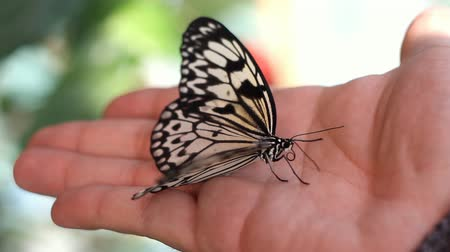 полет : butterfly on the human hand
