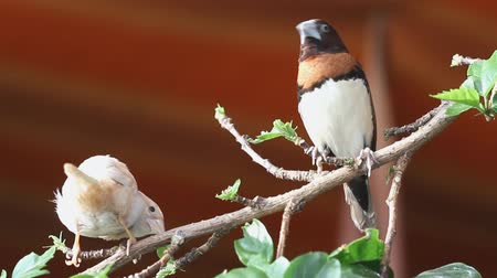 devedikeni : finches sitting on a branch in the forest
