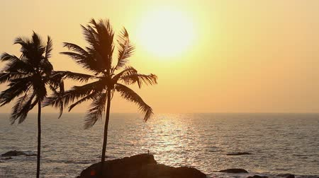 coconut palm tree : Palm Trees Silhouette At Sunset