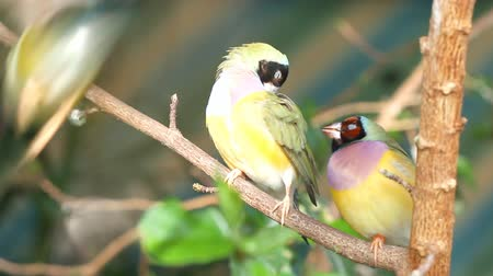 préri : finches sitting on a branch in the forest