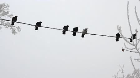 kable : Birds on a electrical wire over sky at winter day Wideo