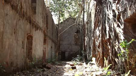 banyan : Ruins of Redi fort in Khalchikar at summer day. Stock Footage
